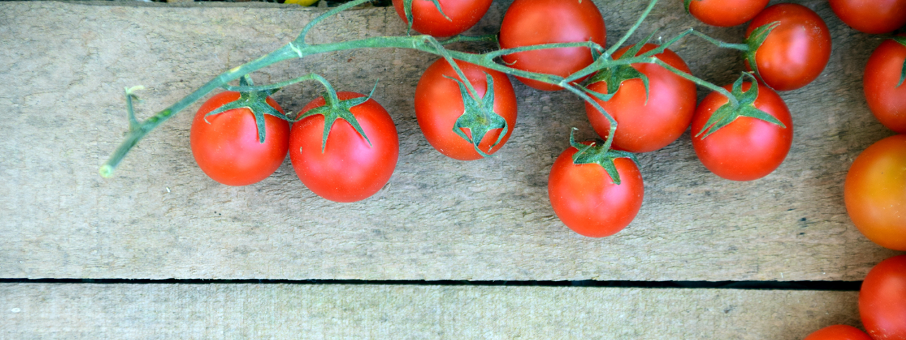 Fresh tomatoes, the base ingredient for Tomato powder used in Animal Nutrition by Caldic