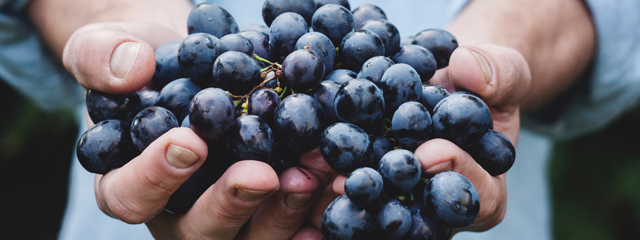 A person holding a bunch of blue grapes. We offer turn-key formulations for your fruit preservatives.