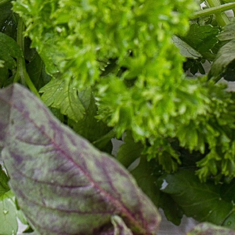 An array of fresh bright green herbs such as basil, parsley, and cilantro.